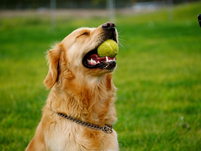 This tennis ball really is the best!